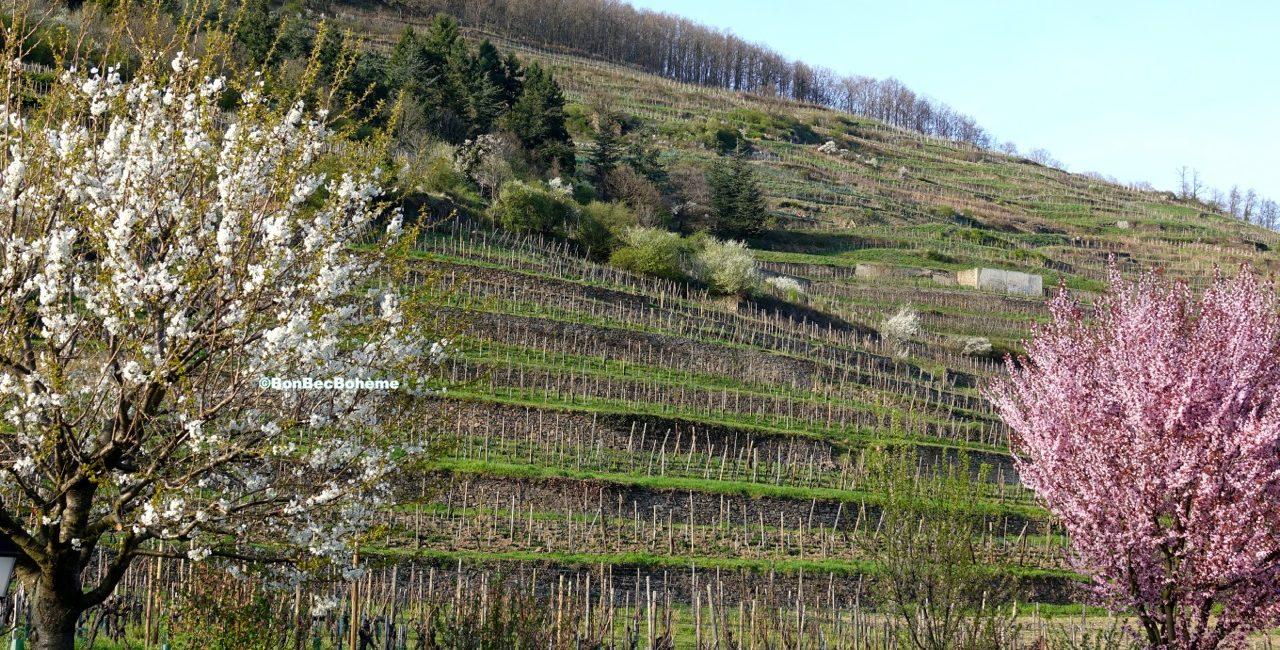 Le vignoble de Kayseberg en Alsace