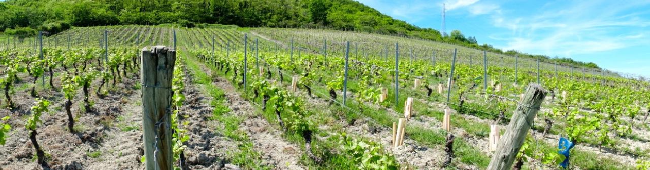 vignoble AOC côtes-d'Auvergne Châteaugay