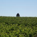 Vignoble et clocher de La Livinière