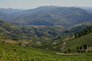 La vallée du Douro, un lieu sauvage et cultivé de vignobles anciens