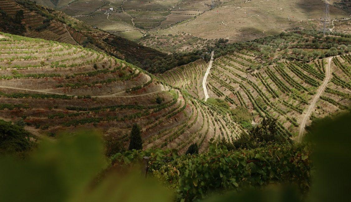 Le vignoble en terrasses de la vallée du Douro