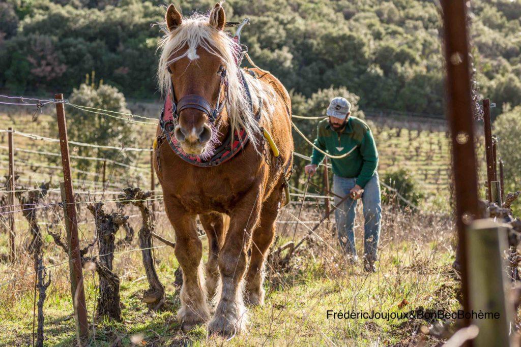 Le travail du cheval au vignoble
