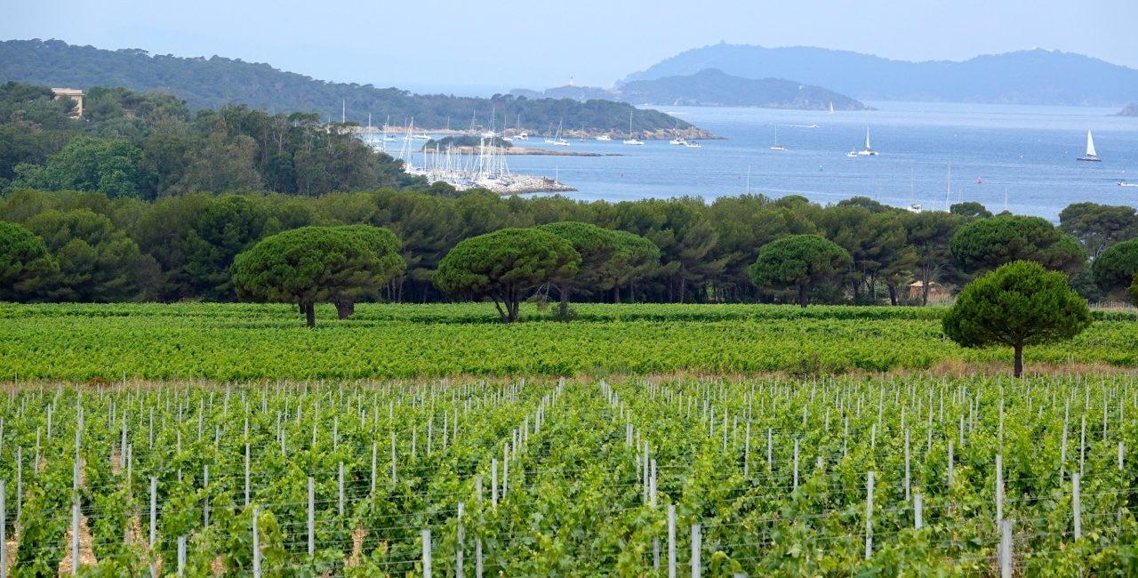 Porquerolles, l'île aux vins