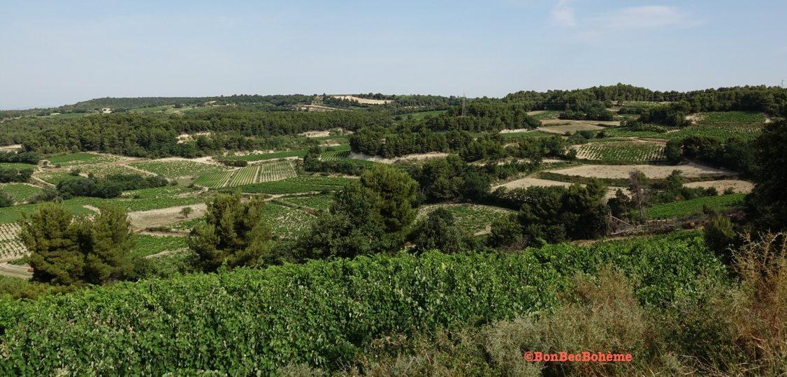 Vue sur le vignoble de Rasteau