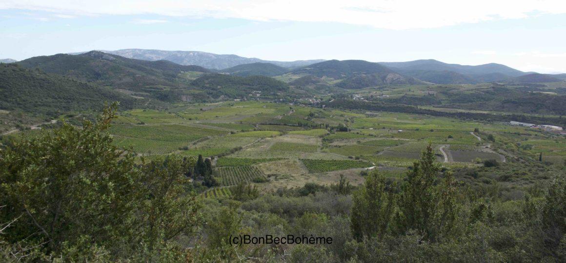 Les Corbières AOC - Vignoble